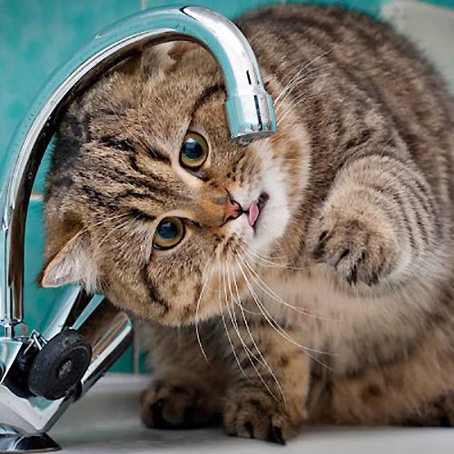 貓碗/水機/濾芯