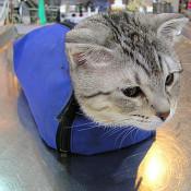 貓袋/貓箱/貓車