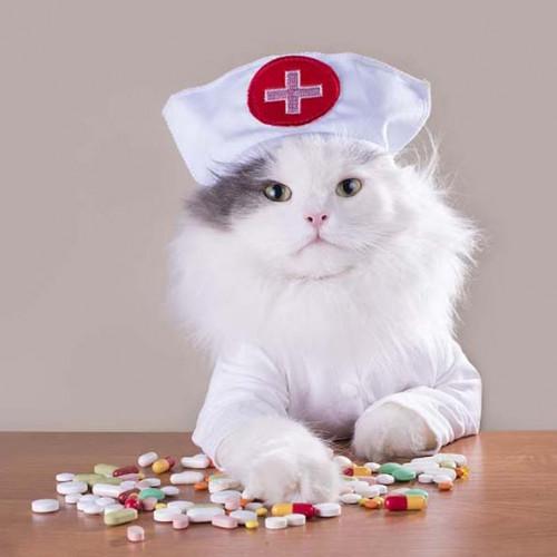 貓補品,護理醫護