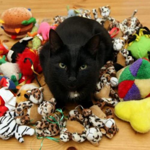 貓用具玩具傢俬電器
