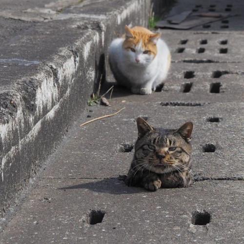 餵浪浪街貓專區