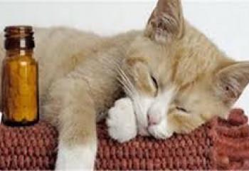 腎貓飲食篇 (二)