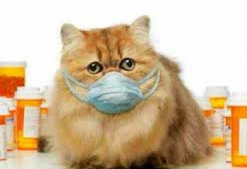 貓咪有腎病可怕嗎?  (一)