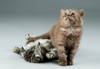 如何訓練貓咪在貓砂裡大小便