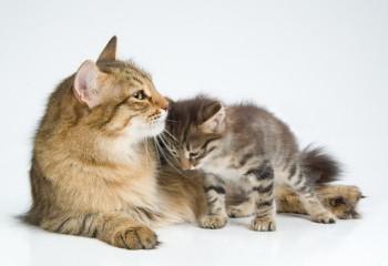 要給貓咪定期驅蟲