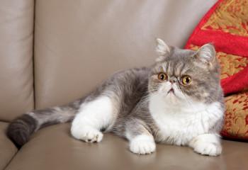 猫咪可以吃什么 注意合理的搭配食物