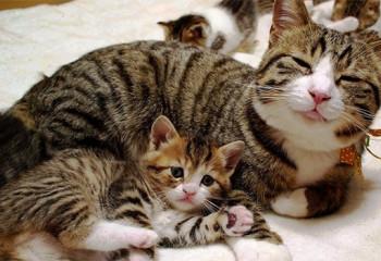 夏季飼養貓咪需要做到四點