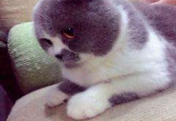 養貓的六大常識誤區