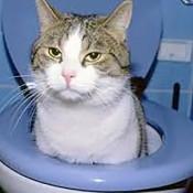 廁所,貓砂剷除臭用品