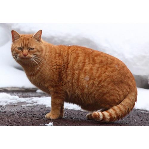 免費乾糧試食 Free Sample Nature's Protection Kitten 全天然初生幼貓糧
