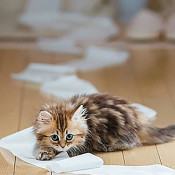 寵物家居清潔