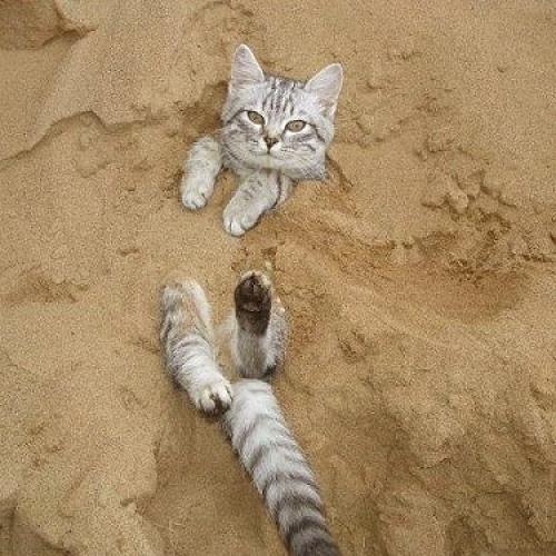 貓砂/貓砂盆及相關用品